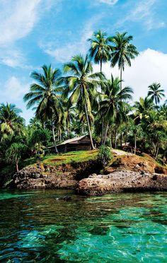 New Guinea #travel #junkydotcom #sea #palm