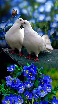 Nadire Atas on Love Birds All Birds, Cute Birds, Pretty Birds, Beautiful Birds, Animals Beautiful, Beautiful Gif, Dove Pictures, Bird Pictures, Pictures Images