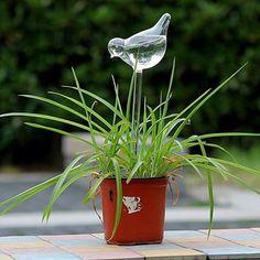 GLASS WATERING SPIKE