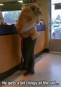 Do you approach risk the way this dog approaches the vet? It may not be as bad as you think.