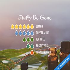 essential oil diffuser recipes for pimples essential oil blends for good mood Essential Oils Sinus, Oils For Sinus, Citronella Essential Oil, Essential Oils Guide, Essential Oil Diffuser Blends, Stuffy Nose Essential Oils, Essential Oil Combinations, Nail Polish, Lotion
