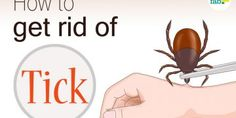 how to get rid of a tick