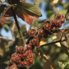 Fragrant Sumac | Nature Hills Nursery Spring Flowers, Shrubs, Nature, Plants, Landscaping, House Ideas, Nursery, Park, Eggs