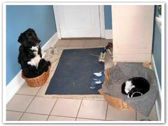 Who Is The Boss? http://media-cache5.pinterest.com/upload/21955116903356498_SBB7kGro_f.jpg entertainingelf animals
