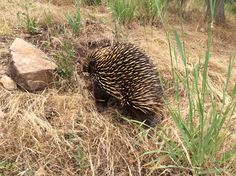 on our farm Echidna, Open Fires, Winter Season, Bed And Breakfast, Victoria, Winter Time, Winter