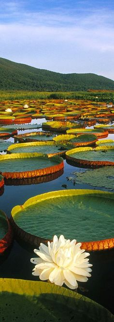 Pantanal mato-grossense, Brasil