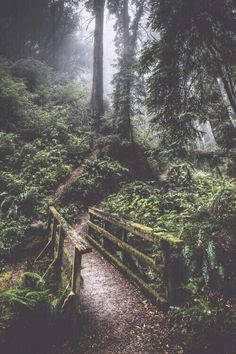 New Wild Nature Landscape Pathways 51 Ideas Beautiful World, Beautiful Places, Foto Casual, Wild Nature, Belleza Natural, Pathways, Nature Photos, Beautiful Landscapes, The Great Outdoors