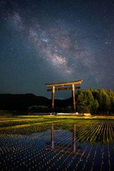 Rice field under a Torii Gate, Japan