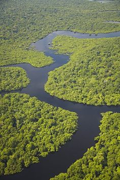 Aerial view of Amazon rainforest and tributary of the Rio Negro, Manaus, Amazonas, Brazil, South America