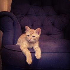 #tigresminha #kitten #cat