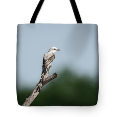 Scissor-tailed Flycatcher Out On A Limb Tote Bag featuring the photograph Scissor-tailed Flycatcher Out On A Limb by Debra Martz