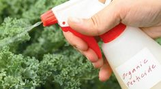 Organic Pesticides using DYI Methods
