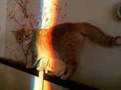 grafika cat, rainbow, and animal I Love Cats, Cute Cats, Funny Cats, Crazy Cat Lady, Crazy Cats, Animals And Pets, Cute Animals, Gatos Cats, Doja Cat