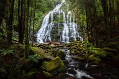 Nelson Falls is located in the West Coast of Tasmania. As the sun sets, the forest help diffuse the harsh Australian sun. Long exposure and a polarising filter combine to help create a surreal, dream-like scene to the cascading waterfall.