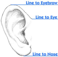ear to eyebrow/eye/nose alignment reference