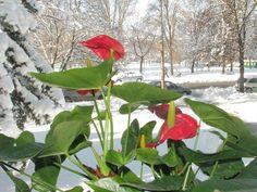 9 pompás növény a karácsonyi hangulathoz | Balkonada Plant Leaves, Stuffed Peppers, Vegetables, Plants, Stuffed Pepper, Vegetable Recipes, Plant, Stuffed Sweet Peppers, Veggies