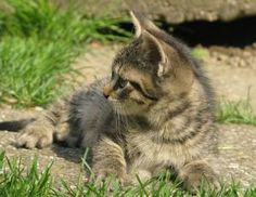 How to Keep cats out of your garden - Outdoor cats often stray into other people's gardens, where they can make a mess and wreck what you're trying to grow.