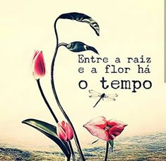 Nill de tudo um pouco: Bom Dia 🙌 🌹 Great Quotes, Inspirational Quotes, Pink Stars, Mother Mary, Happy Sunday, Favorite Quotes, Positivity, Messages, Lettering