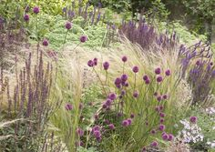 De stora prisbelönta designrabatterna letar sin in i de privata trädgårdar. Trenden med att väva in perenna gräs i rabatter blir bara större och större. Det ger rabatter som ser naturliga och ängslika ut. Gräsen ger ett mjukt och avslappnande intryck. Kolla in vårt nya sortiment av perenna gräs och blommor i butiken!