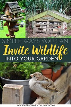 How to Invite Wildlife Into Your Garden Plants Under Trees, Eco Garden, Bug Hotel, Invite, Invitations, How To Attract Birds, Perfect Plants, Companion Planting, Craft Activities For Kids