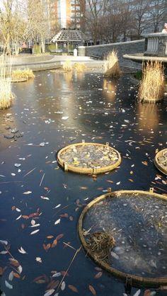 Frozen pond in new york