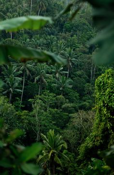 It's not just beaches in Bali. Bali, Indonesia (by Marty Mellway) Places To Travel, Places To See, Tropical Forest, Amazon Rainforest, Parcs, Mother Nature, Mother Earth, Beautiful Places, Scenery