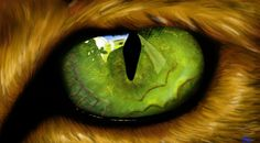 Close up - green eye - cat - markusbrekke