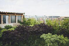 Stedsans Rooftop Farm Restaurant · Copenhagen – iGNANT.de