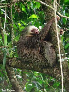 21 Belize And Costa Rica Ideas Belize Costa Rica Costa