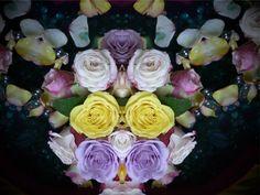 Mirroring Roses