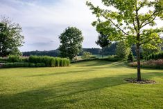 Zahrada zvlněná | Atelier Flera Boxwood Garden, Golf Courses, Sidewalk, Atelier, Side Walkway, Walkway, Walkways, Pavement