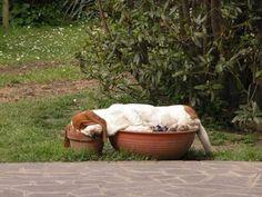 a pot pillow