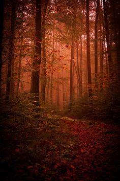 Dawn Redwood Lumber Value