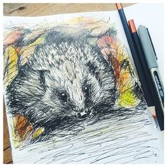 Little hedgehog rustling in some autumn leaves for today's #inktober. Black uni-ball with some coloured pencils.  #inktober2015, #sketchbook, #sketching, #drawing, #illustration, #hedgehog, #nature, #wildlife, #blackpen, #animals, #autumn, #leaves, #artwork, #clarebuswell.