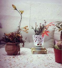 series air bonsai.
