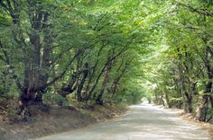 from 1000 awesome things book  #117 Driving down an old road with trees that touch and form a canopy over everything