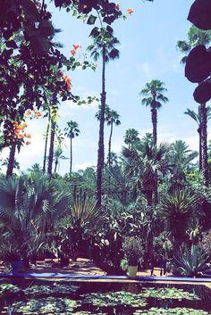 Jardin Majorelle in Marrakech. Yves Saint Laurent's beautiful botanic garden and his most favourite place.