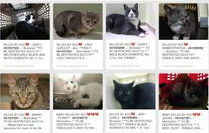 ALL KILLED BY ACC 05/27/15