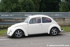 cal look beetle - Google Search