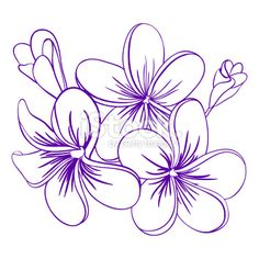 frangipani tattoos designs free - Google Search