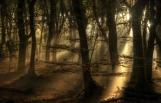 And their will be light! - The light was stunning through this dark forest!