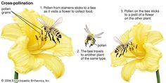 this picture explain the process of pollination