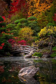 Japanese Garden Landscape, Japanese Garden Design, Japanese Gardens, Japanese Nature, Asian Garden, Beautiful Landscapes, Beautiful Gardens, Landscape Photography, Nature Photography