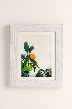 Slide View: 1: Jonathan Lo Kumquats Art Print