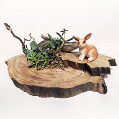 ウサギ rabbit 一本木(Ipponki)山梨県北杜市大泉町西井出8240-2126 #miniature #diorama #animal #plant #houseplant #indoorplan #crafting #handcrafted #art #succulents #botanical #wood #woodworking #多肉植物 #寄せ植え #観葉植物