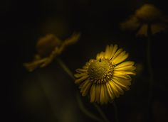 Paul Barson Photography » With A Little Help From My Friends