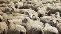 #MediaMalpractice 🐑   It's time for the media to stop acting like sheep. 🐑 @wgbhnews