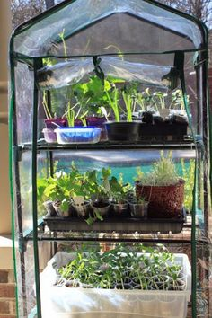 Growing up and moving out – of the greenhouse, that is...