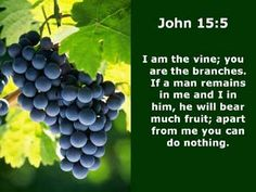 Are we separate branches or part of The Vine? (John 15:1-4) | YOGA