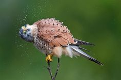 Bird Photography – 25 Brilliant Examples